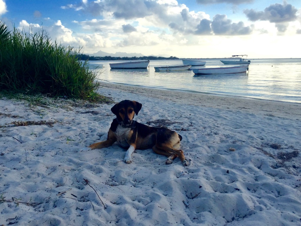 Even the wild dogs like to relax on the beach and take a swim after a long night barking